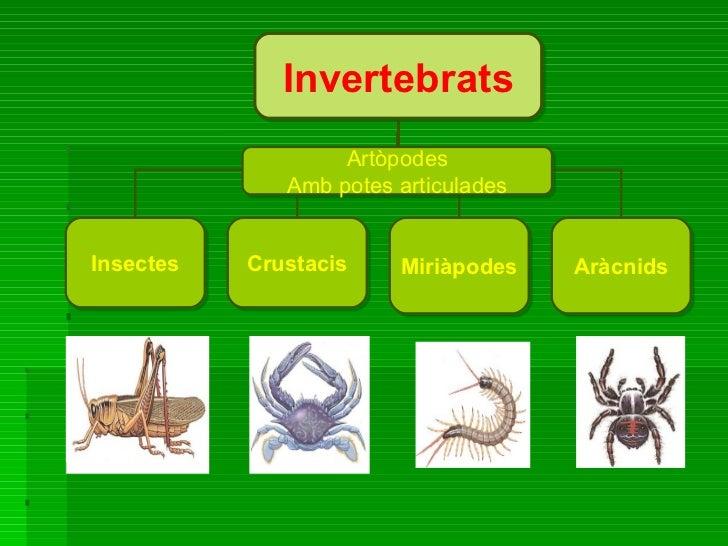 Invertebrats Insectes Crustacis Miriàpodes Aràcnids Artòpodes Amb potes articulades