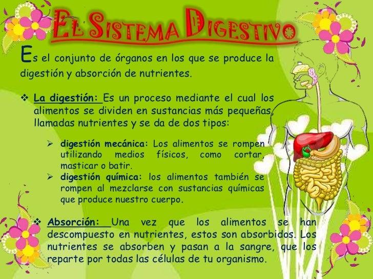 Los órganos que intervienen en el proceso de digestión y      absorción de nutrientes son:Es la primera parte del aparato ...