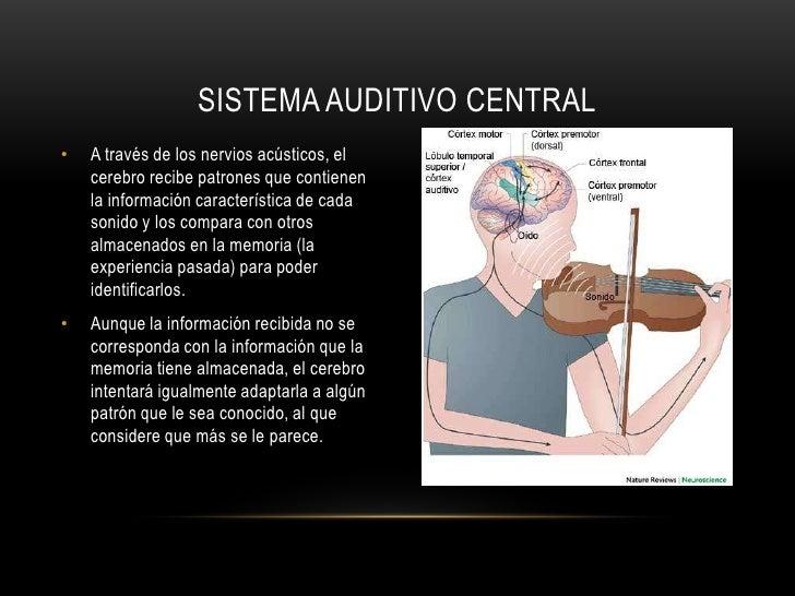 El sistema auditivo