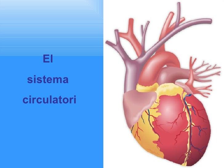 El  sistema  circulatori