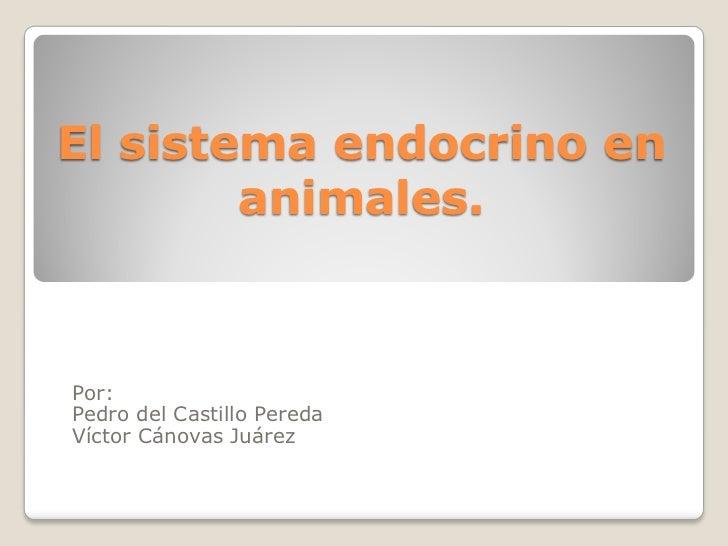 El sistema endocrino en        animales.Por:Pedro del Castillo PeredaVíctor Cánovas Juárez