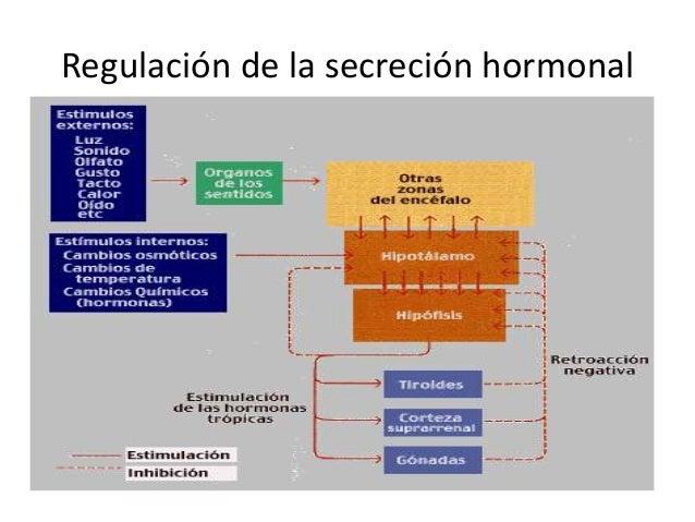 El sistema endocrino, trabajo de biologia y conducta
