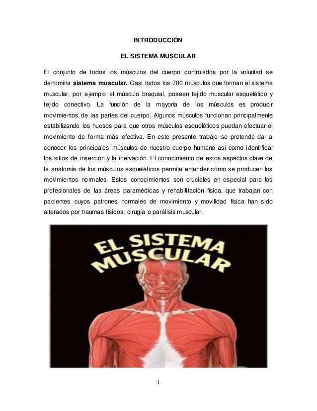 el-sistema-muscular-1-638.jpg?cb=1482957009