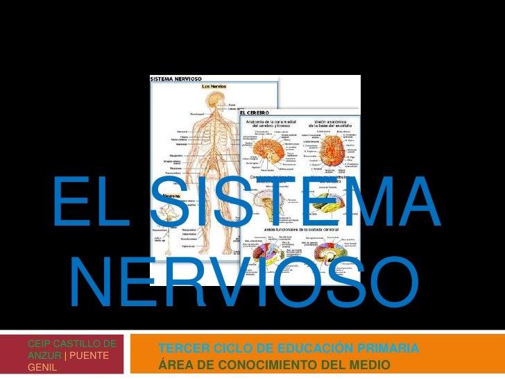 TERCER CICLO DE EDUCACIÓN PRIMARIA<br />ÁREA DE CONOCIMIENTO DEL MEDIO<br />EL SISTEMA NERVIOSO<br />CEIP CASTILLO DE ANZU...