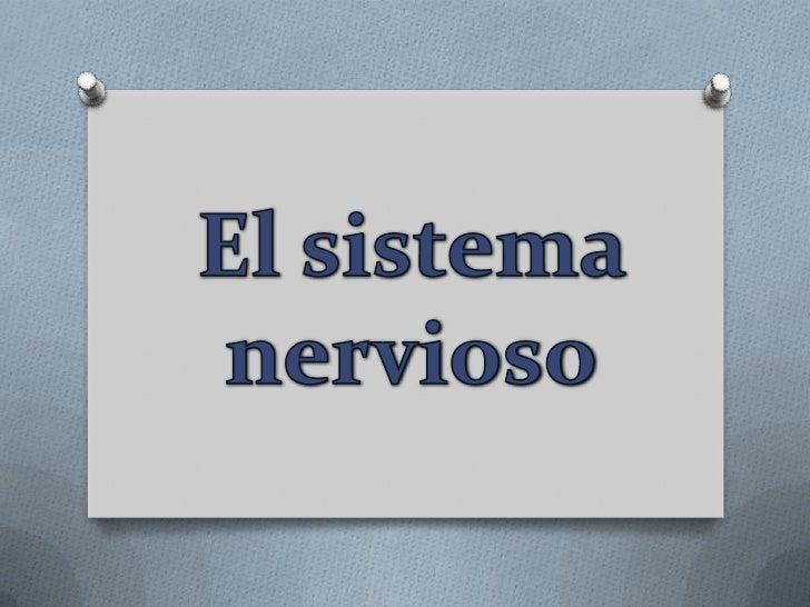 El sistema nervioso<br />