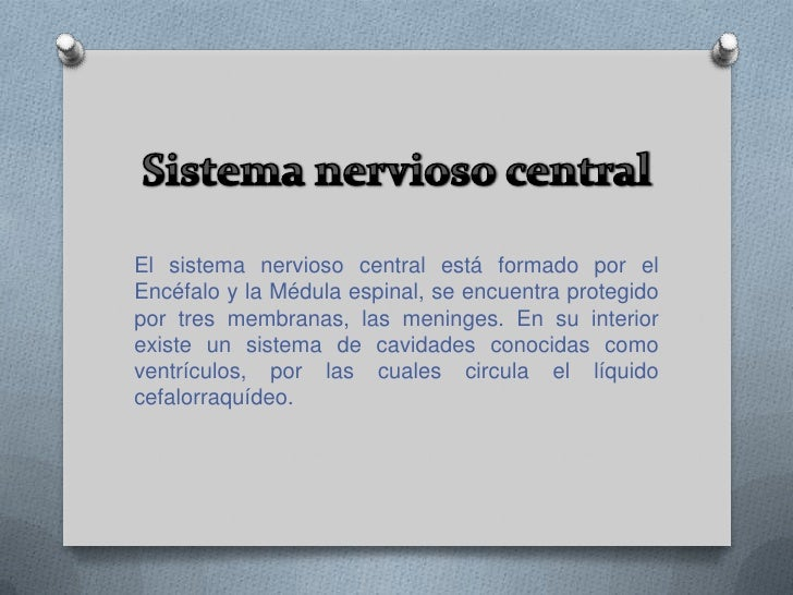 El sistema nervioso de los seres humanos se agrupa en distintos órganos, los cuales conforman estaciones por donde pasan l...