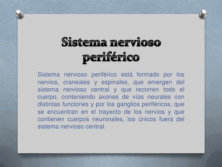Medula espinal<br />La médula espinal es una prolongación del encéfalo, como si fuese un cordón que se extiende por el int...