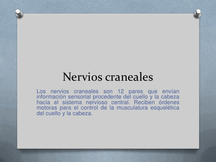 Sistema nervioso periférico<br />Sistema nervioso periférico está formado por los nervios, craneales y espinales, que emer...