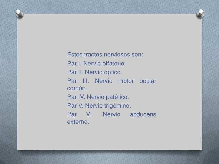 Nervios craneales<br />Los nervios craneales son 12 pares que envían información sensorial procedente del cuello y la cabe...