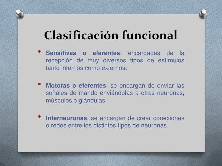 Multipolares, son neuronas con múltiples proyecciones dendríticas y una sola proyección axonal.</li></li></ul><li>Clasific...