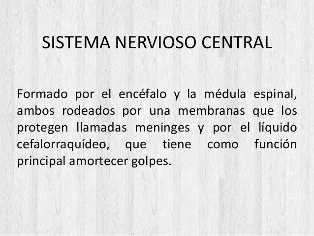 SISTEMA NERVIOSO CENTRAL Formado por el encéfalo y la médula espinal, ambos rodeados por una membranas que los protegen ll...