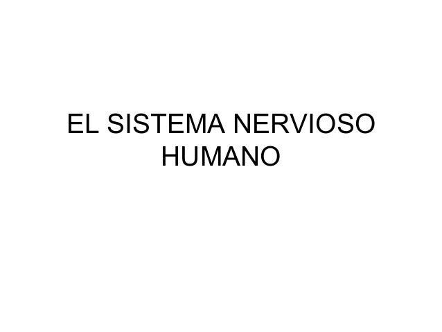 EL SISTEMA NERVIOSOHUMANO
