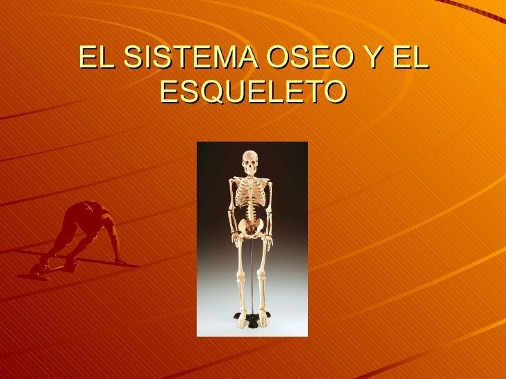 EL SISTEMA OSEO Y EL ESQUELETO