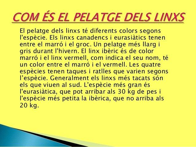 El pelatge dels linxs té diferents colors segons l'espècie. Els linxs canadencs i eurasiàtics tenen entre el marró i el gr...