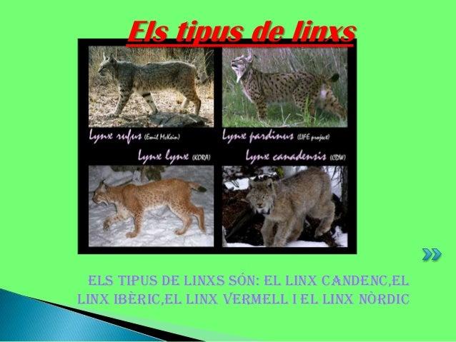Els tipus de linxs  Els tipus de linxs són: el linx candenc,el linx ibèric,el linx vermell i el linx nòrdic