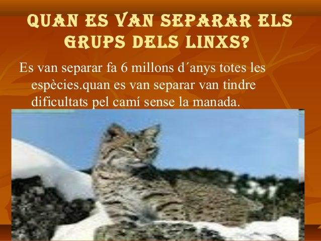 QUAN ES VAN SEPARAR ElS gRUPS dElS liNxS? Es van separar fa 6 millons d´anys totes les espècies.quan es van separar van ti...