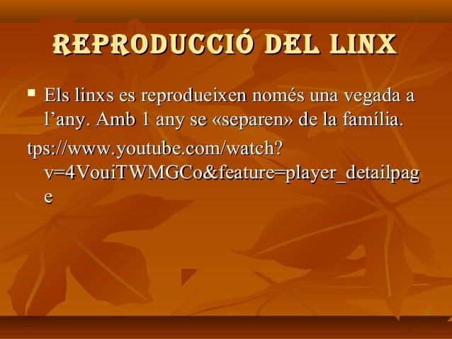 REPRodUcció dEl liNx Els linxs es reprodueixen només una vegada a l'any. Amb 1 any se «separen» de la família. tps://www.y...
