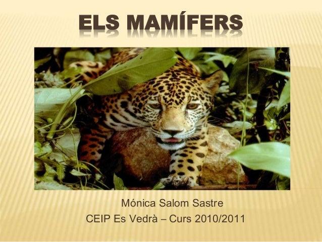 ELS MAMÍFERS Mónica Salom Sastre CEIP Es Vedrà – Curs 2010/2011