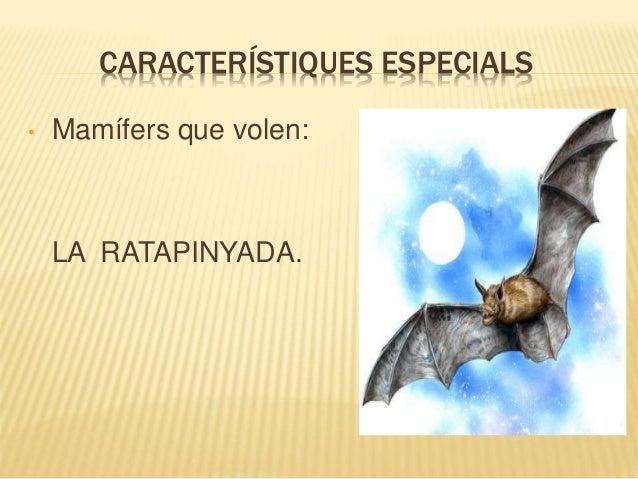 CARACTERÍSTIQUES ESPECIALS • Mamífers que volen: LA RATAPINYADA.