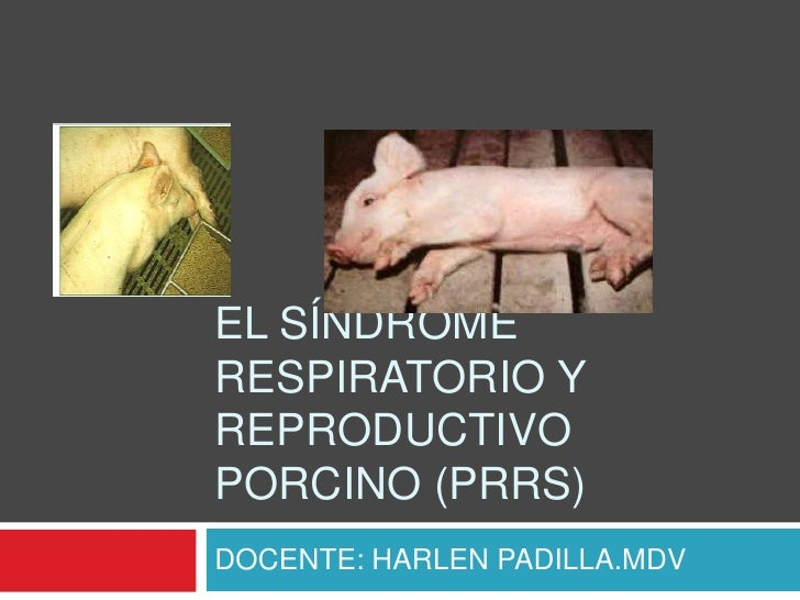 EL SÍNDROMERESPIRATORIO YREPRODUCTIVOPORCINO (PRRS)DOCENTE: HARLEN PADILLA.MDV