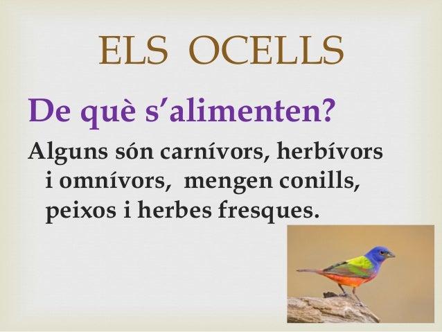 ELS OCELLS De què s'alimenten? Alguns són carnívors, herbívors i omnívors, mengen conills, peixos i herbes fresques.