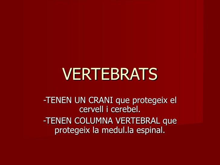 VERTEBRATS -TENEN UN CRANI que protegeix el cervell i cerebel. -TENEN COLUMNA VERTEBRAL que protegeix la medul.la espinal.