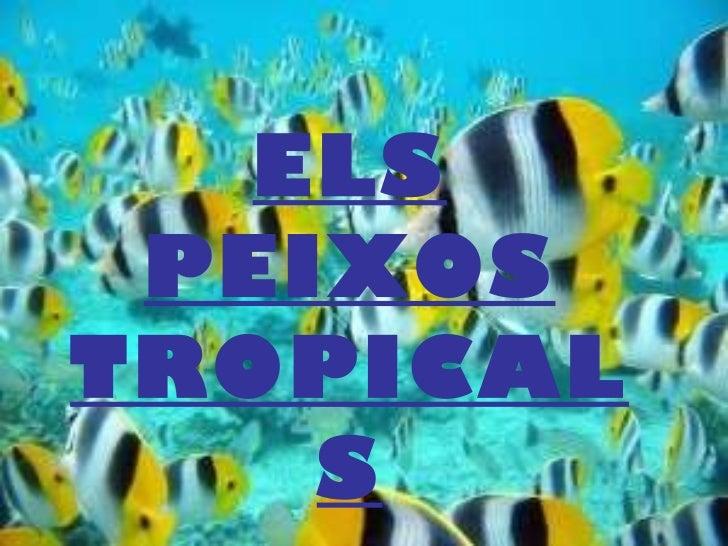 ELS PEIXOS TROPICALS