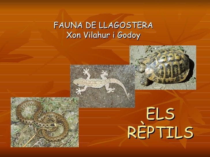 Els rèptils de Llagostera