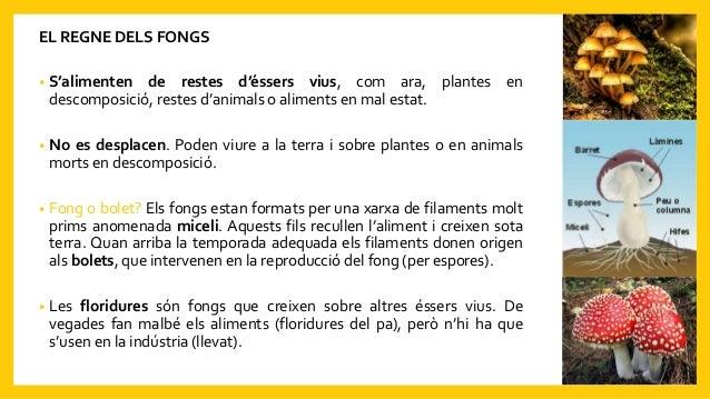 EL REGNE DELS FONGS • S'alimenten de restes d'éssers vius, com ara, plantes en descomposició, restes d'animals o aliments ...