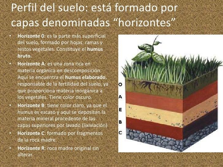 El suelo for Como estan formados los suelos