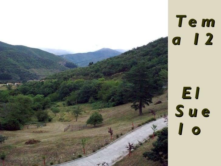 Tema 12 El Suelo