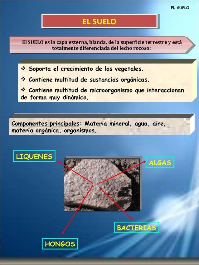 EL SUELO                             EL SUELO                             EL SUELO   El SUELO es la capa externa, blanda, ...