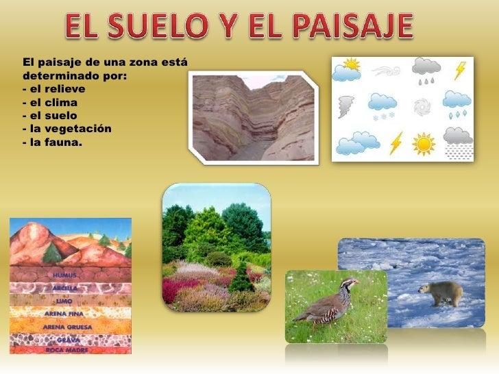 El suelo la vegetaci n y la fauna - Materiales para suelos ...