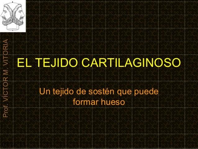 09/26/13 1 Prof.VÍCTORM.VITORIA EL TEJIDO CARTILAGINOSO Un tejido de sostén que puede formar hueso