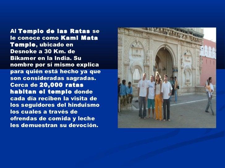 Al Templo de las Ratas sele conoce como Kami MataTemple, ubicado enDesnoke a 30 Km. deBikamer en la India. Sunombre por sí...