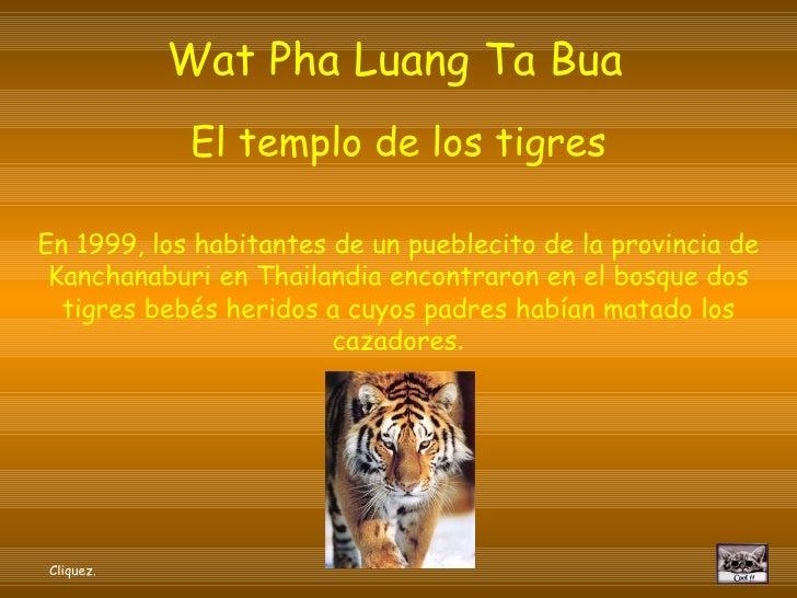 Wat Pha Luang Ta Bua   El templo de los tigres En 1999, los habitantes de un pueblecito de la provincia de Kanchanaburi en...