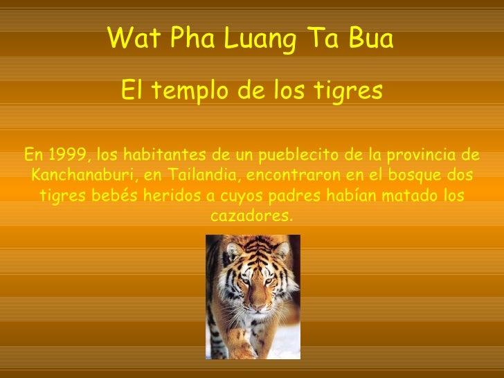 Wat Pha Luang Ta Bua   El templo de los tigres En 1999, los habitantes de un pueblecito de la provincia de Kanchanaburi, e...