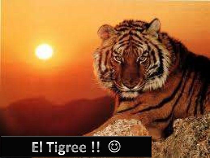El tigree