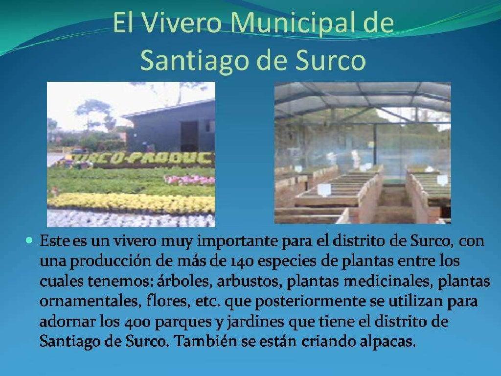 El vivero municipal de santiago de surco for Vivero municipal
