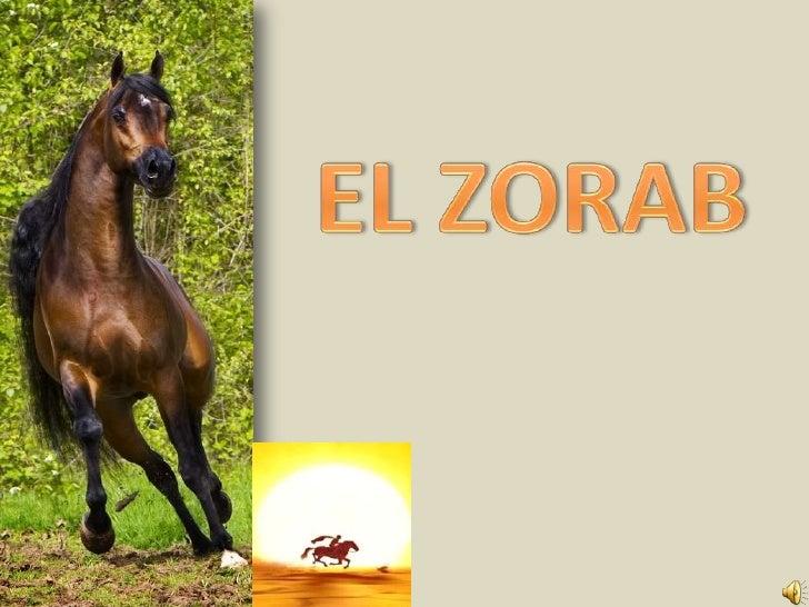 EL ZORAB<br />