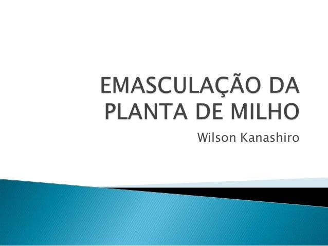 Wilson Kanashiro
