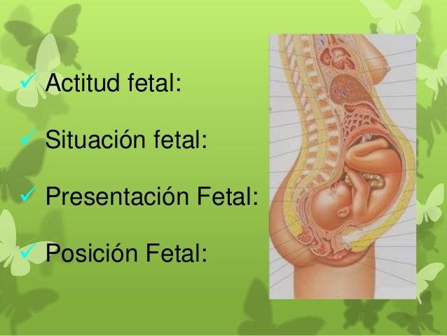  Presentación: es la parte mas baja del feto que está en contacto con el extremo superior de la pelvis materna.