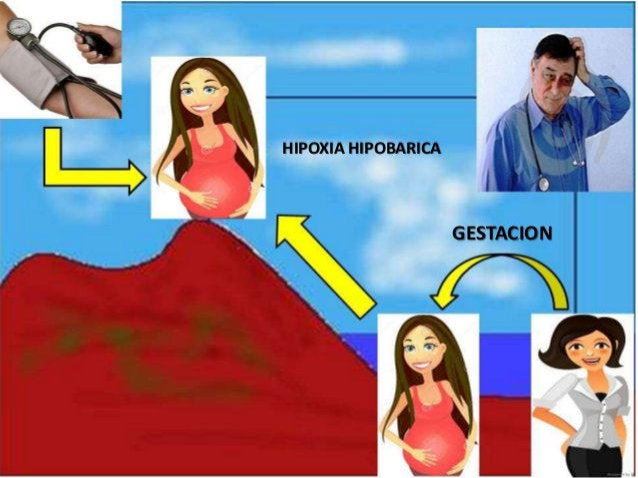 GESTACION HIPOXIA HIPOBARICA