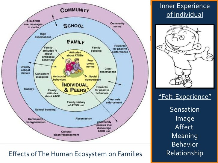 Embodied family therapy a somatic experiencing based ...