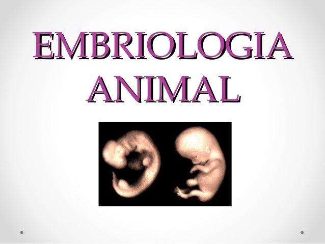 EMBRIOLOGIA ANIMAL