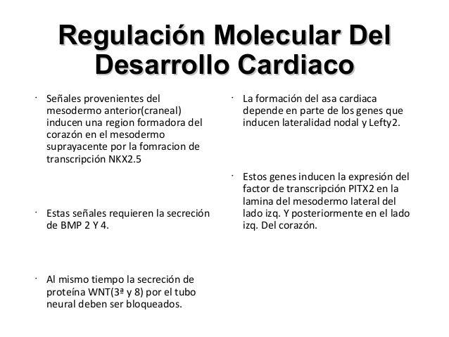 Desarrollo Del Sistema Cardiovascular
