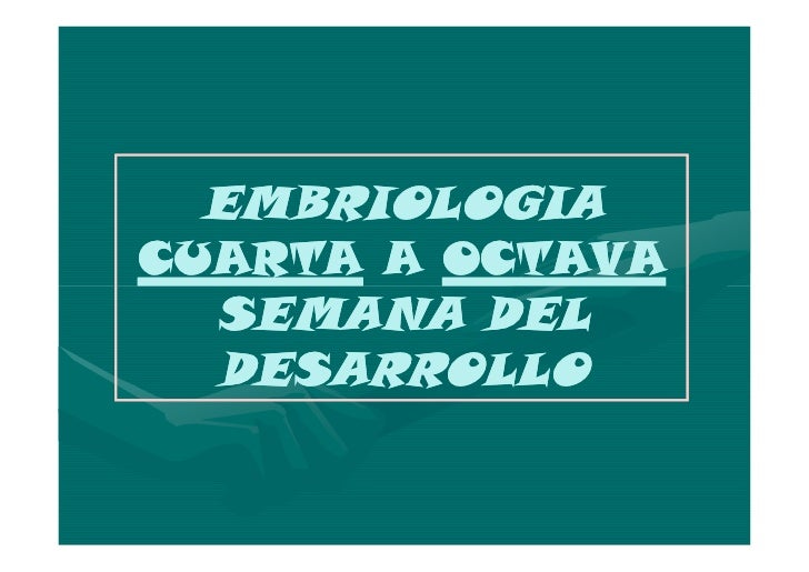 EMBRIOLOGIA: 4 A 8 SEMANACUARTA SEMANA CRECIMIENTO DEL EMBRION      EL EMBRION CRECE CON RAPIDEZ Y      TRIPLICA SU TAMAÑO...