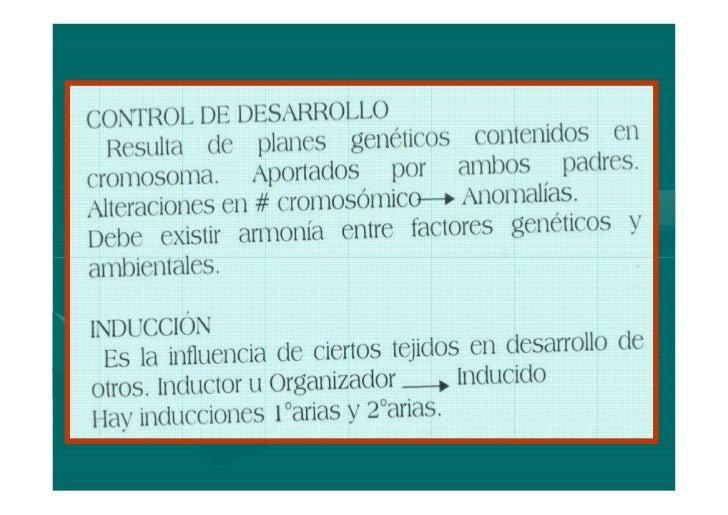 SEXTA SEMANACONTINUA CRECIMIENTO CEFALICOAPARECE: CODOS-MUÑECAS Y RAYOS         CODOS-DIGITALES APARECEN Y SE VUELVENPRONU...