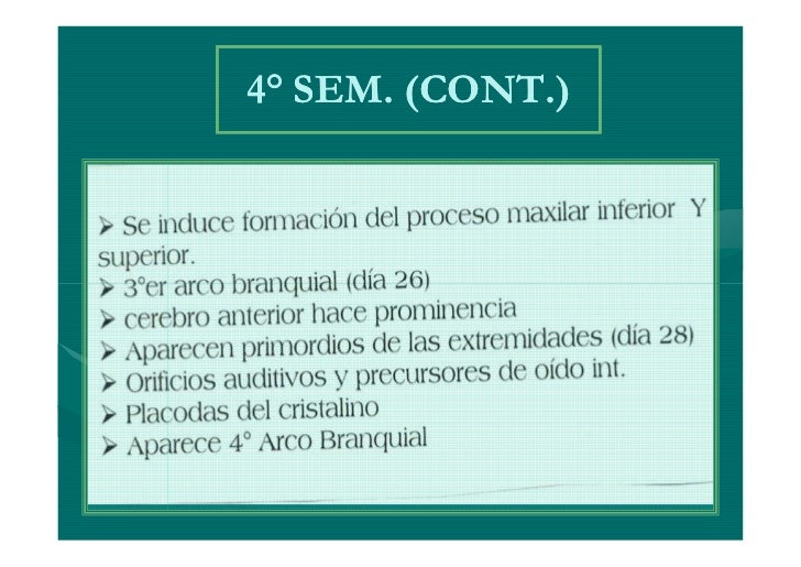 SEPTIMA SEMANAAPARECEN SURCOS ENTRE LOS RAYOSDIGITALES EN LAS PLACAS DE LAS MANOSOCURRE LA HERNIACION UMBILICALPORQUE LA C...