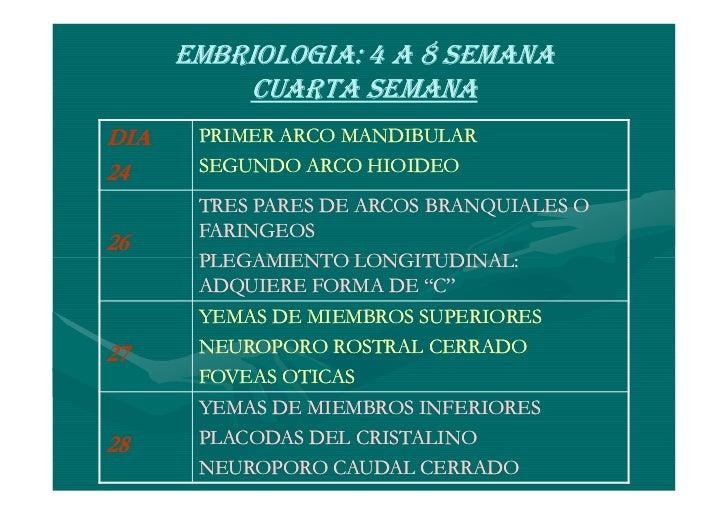SEPTIMA SEMANACOMUNICACIÓN DEL INTESTINO PRIMITIVOY SACO VITELINO             TALLO VITELINOINTESTINOS PENETRAN AL CELOMAE...